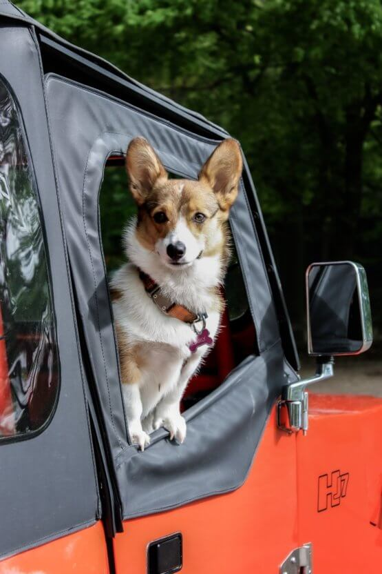 corgi_in_car.jpeg