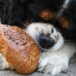 dog_eating_bagel.jpeg