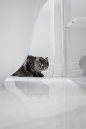 cat_hiding_behind_bathtub.jpeg