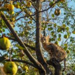 cat_on_fruit_tree.jpeg