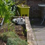 cat_in_garden.jpeg